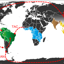 Just out |  In and out of the Neotropics: historical biogeography of Eneopterinae crickets @ Journal of Biogeography