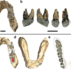 Just out | Potential hominin affinities of Graecopithecus from the Late Miocene of Europe @ PLOS one