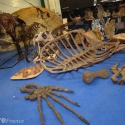 On the News | Une société de l'Allier au cœur d'un présumé trafic de fossiles @ La Montagne