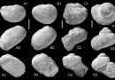 Just out | Early Miocene reef- and mudflat-associated gastropods from Makran (SE-Iran) @ PalZ
