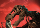 On the News | UK | T. rex gets a protein shake-up – prehistoric collagen identified as modern contaminant @ University of Manchester