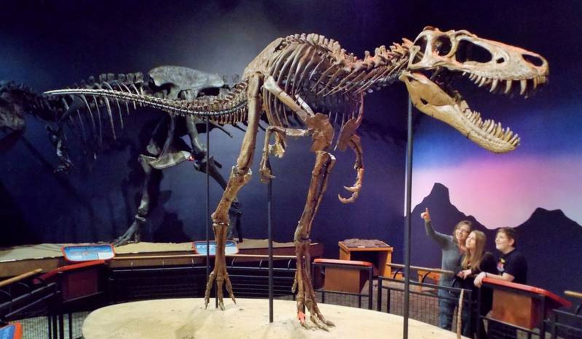 On the News | USA | T rex was the king of chomp @ Daily Herald