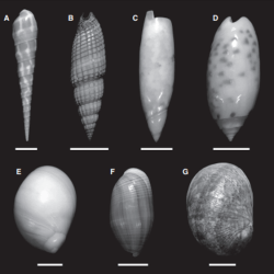 Just out   Life in the arena: infaunal gastropods and the late Phanerozoic expansion of marine ecosystems into sand @Palaeontology