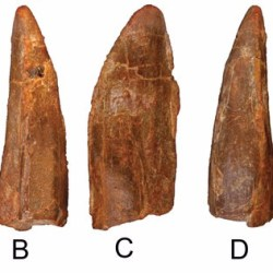 Just out | Europatitan eastwoodi, a new sauropod from the lower Cretaceous of Iberia in the initial radiation of somphospondylans in Laurasia @ PeerJ
