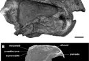 """Just out 