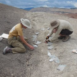 Postdoctoral Researcher | Paleoecology or Sedimentary Geology