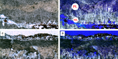 Just out | δ18O-derived incubation temperatures of oviraptorosaur eggs @Palaeontology