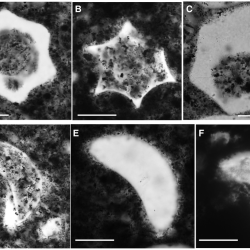 Just out | Vase-shaped microfossils from the Tonian Callison Lake Formation of Yukon, Canada: taxonomy, taphonomy and stratigraphic palaeobiology @ Palaeontology