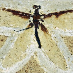 Just out | A systematic reappraisal of Araripeneuridae (Neuroptera: Myrmeleontoidea), with description of new species from theLowerCretaceous Crato Formation of Brazil @Cretaceous Research