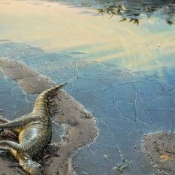 On the News   Australia   Study reveals big picture for Victoria's little dinosaur @ The Sydney Morning Herald