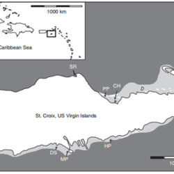 Just out | Evidence for stratigraphy in molluscan death assemblages preserved in seagrass beds: St. Croix, U.S. Virgin Islands @ Paleobiology