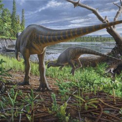On the News | Australia | Long tale of 'turkey' dinosaur that used to roam south-west Victoria @ The Standard