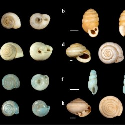 Just out | Terrestrial mollusk records from Chinese loess sequences and changes in the East Asian monsoonal environment @Journal of Asian Earth Sciences