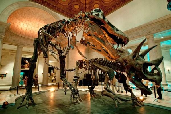 Job | Assistant Collections Manager – Vertebrate Paleontology