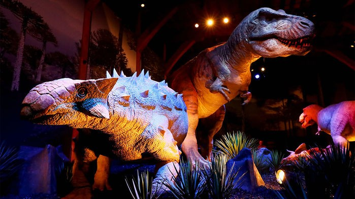 On the News | Canada | Most ankylosaurs were fossilized belly up. Now, scientists think they know why @ Science News