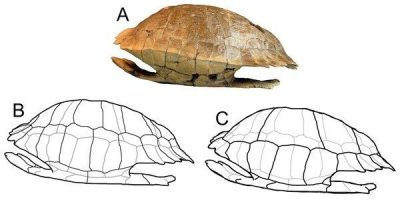 Vertebrates Take The Lead Once More | New Species Reported This Week