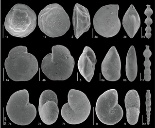 Just out | Early Eocene deep-sea benthic foraminiferal faunas: Recovery from the Paleocene Eocene Thermal Maximum extinction in a greenhouse world @ PLOS one