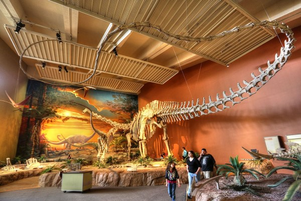 Job | NM Museum of Natural History | Geoscience Collections Specialist
