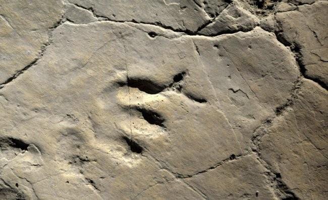 On the News | Spain | Halladas 2.000 huellas de dinosaurio en un yacimiento burgalés @ EFE: Futuro