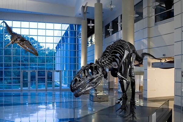 Job | Virginia Museum of Natural History | Assistant Curator – Paleontology