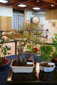 jardin-japones-140