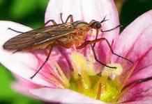 Un nuevo insecticida sustentable cautiva y engaña a los mosquitos