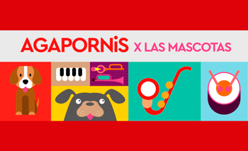 Show de Agapornis en beneficio de las mascostas