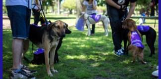 Adopción de Mascotas y Concientización sobre Pirotecnia