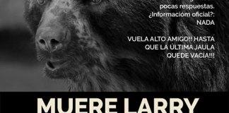 Murió Larry, uno de los osos andinos del Ecoparque