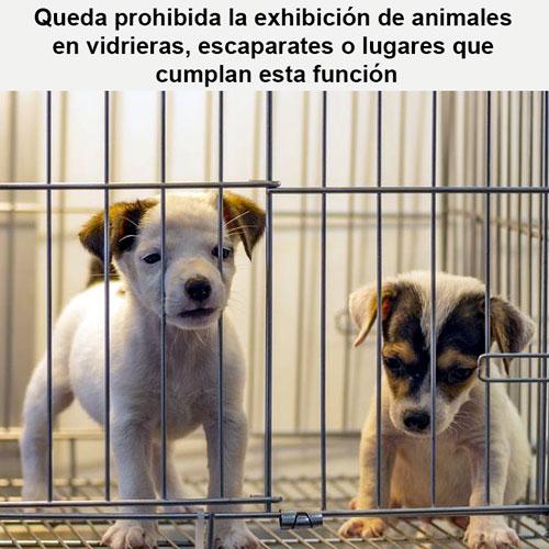 Queda prohibida la exhibición pública de animales