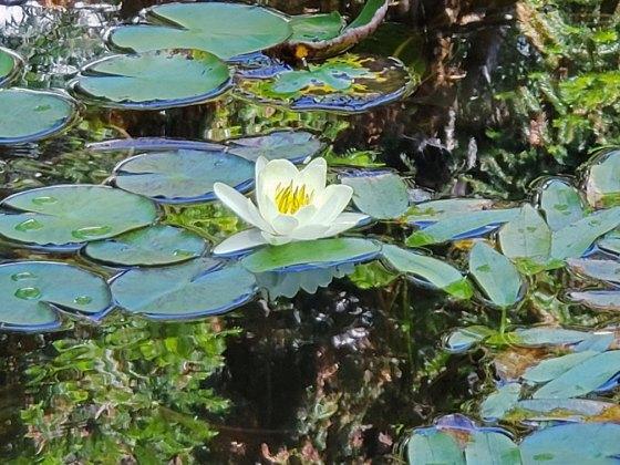 estanque Jardín Botánico