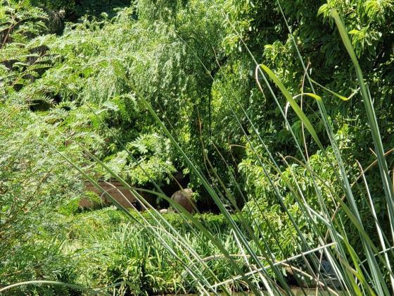 Ecoparque - Desde lejos espiamos un elefante