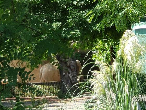 Ecoparque -Ecoparque - Desde lejos espiamos un elefante