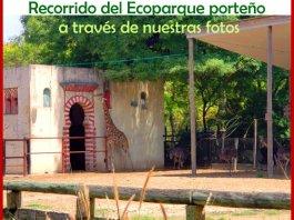 Ecoparque - Jirafa