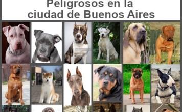 Inscripción en el Registro de Propietarios de Perros Potencialmente Peligrosos