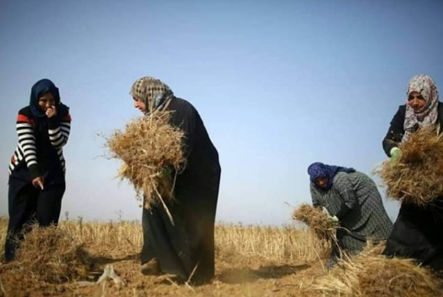 Israeli Army Opens Fire at Palestinian Farmers in Southern Gaza - Palestine  Chronicle