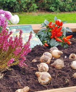 Palettery Blumen Hochbeet Kinder 4