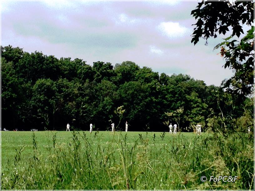Cricket at Palewell Common & Fields