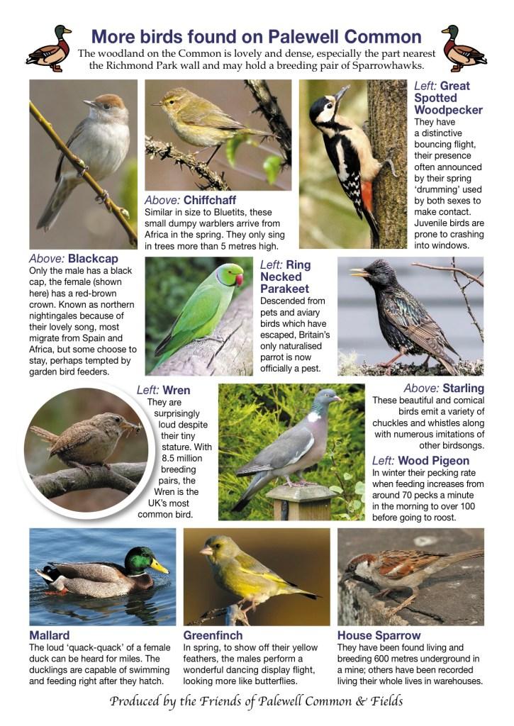 Birds-on-the-Common-2