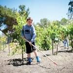 06-revere agri-boy raking