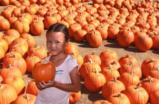 Palisades-Malibu YMCA Pumpkin Patch Opens on Saturday