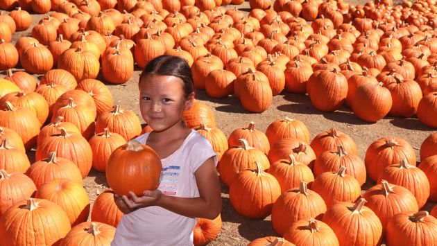 pali ymca pumpkin patch