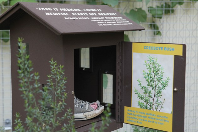 Interactive stations illustrate the value of Native plants as medical remedies.