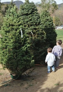 Two residents choose a tree. Photo: Shelby Pascoe