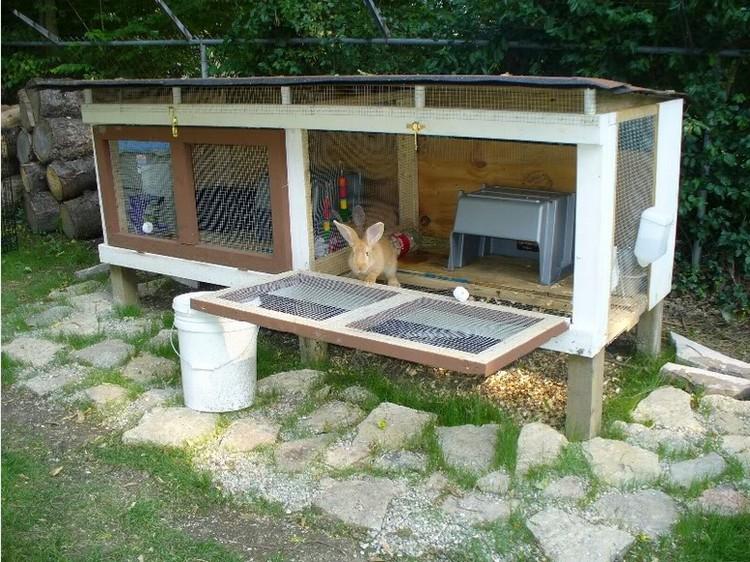 House Pen Rabbit Indoor