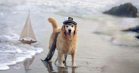 consejos-perro-playa