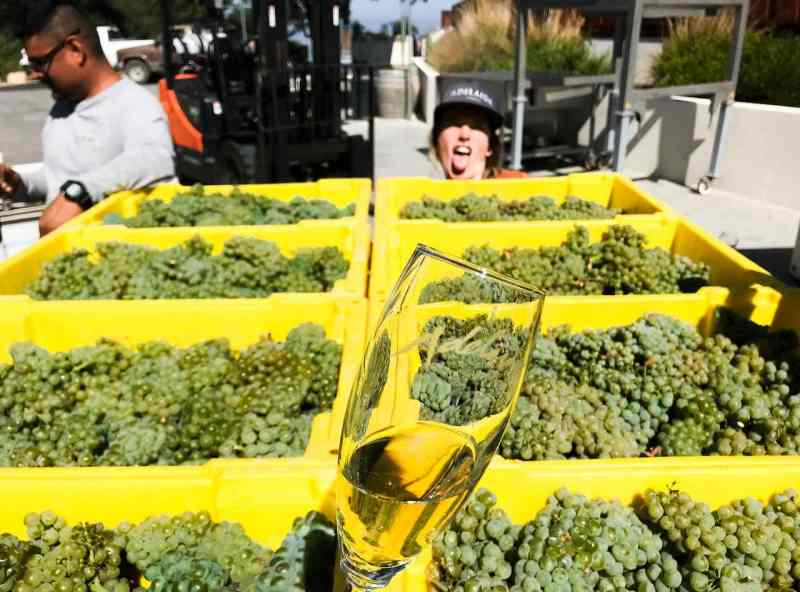 Harvest 2018 First Pick Chardonnay