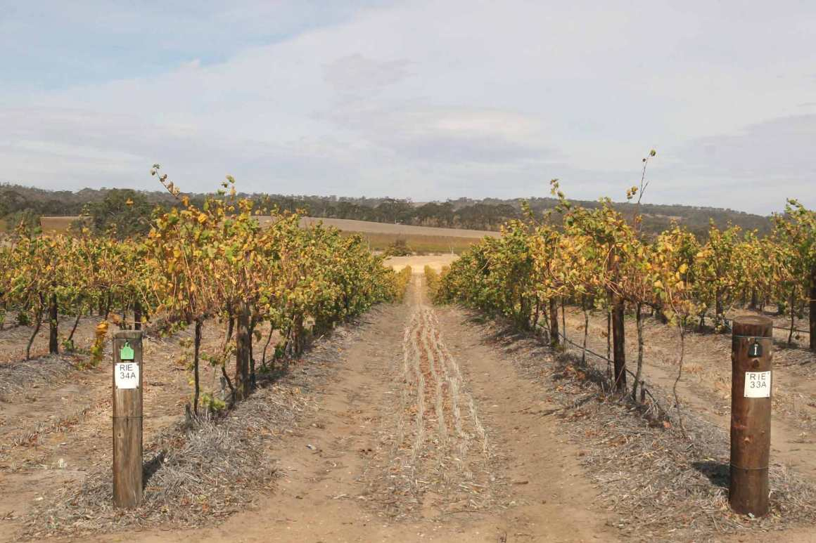 Pikes Wines