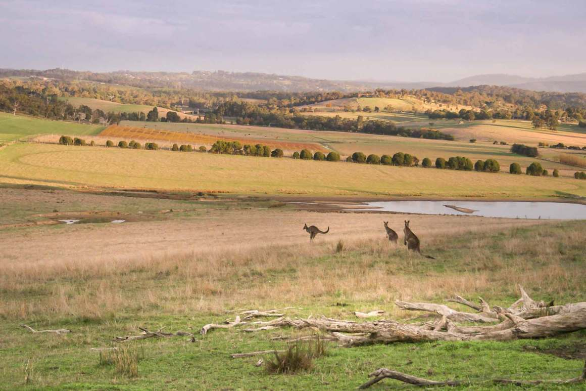 Yarra Valley Wine Region