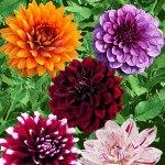 Palmers Garden Centre - Leicestershire's Best Garden Centre